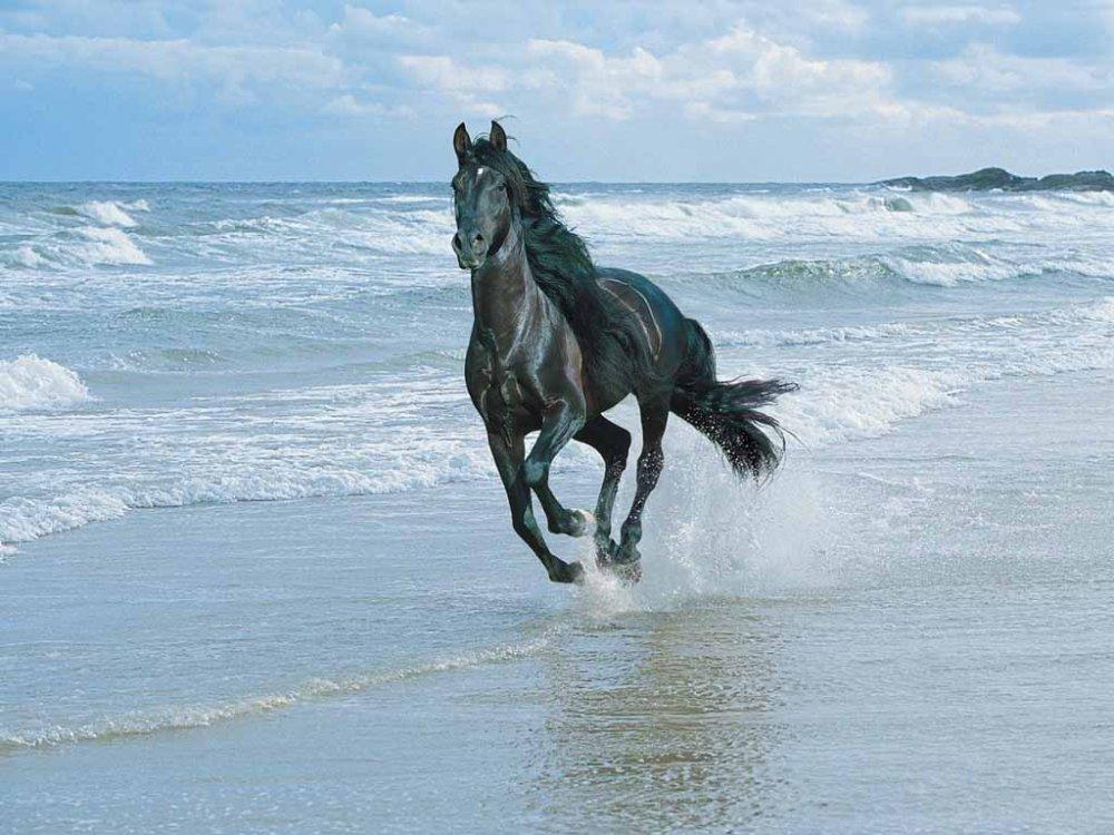 horse-beach.jpg