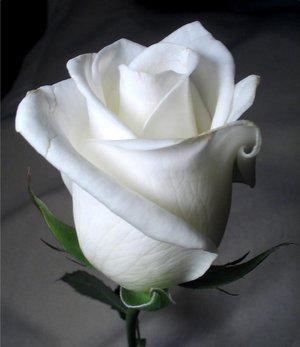 post-51097-1267487404_thumb.jpg