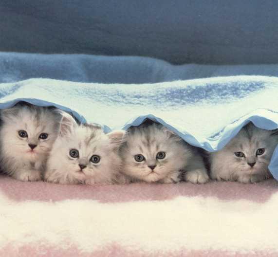 خلفيات رائعه لجهازك صور قطط
